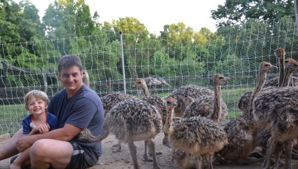 Wayne and ostriches