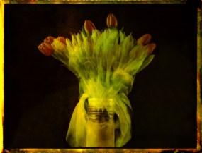 Tulpen 2