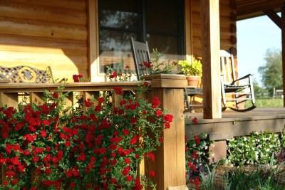 ein Stück Haus mit Veranda aus Holz, die mit roten Röschen bewachsen ist