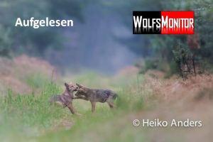 Foto: Natur- und Wildtierfotograf Heiko Anders