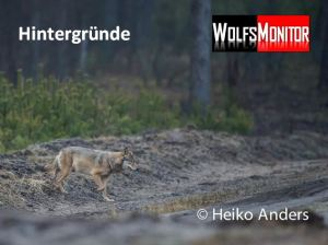 Foto: Tierfotograf Heiko Anders