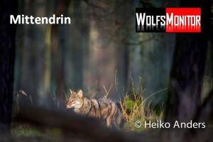 Foto: Wildtierfotograf Heiko Anders