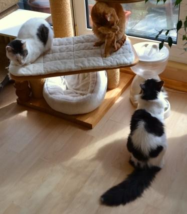 Nicoles Blumenkinder - ein sehr friedliches Katzenrudel
