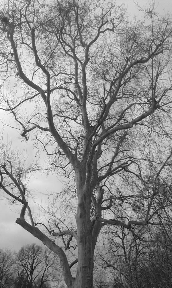 Old Tree (1/2)