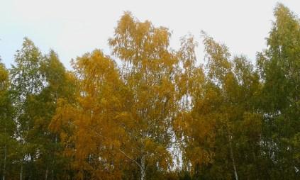 Herbst5