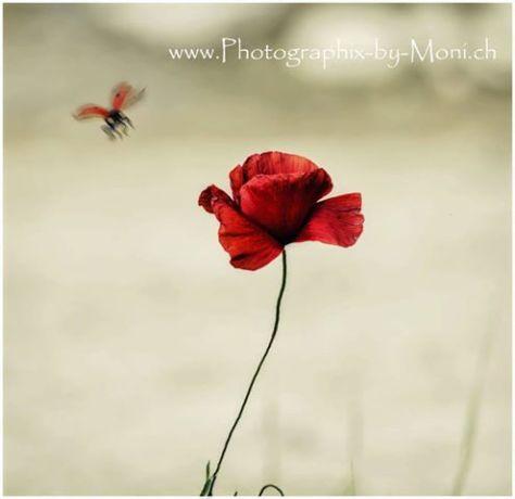 fotographix-moni