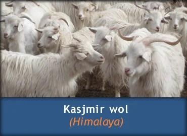 Informatie over Kasjmir wol