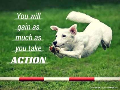 Salvation (dog's name) jumps over a stick