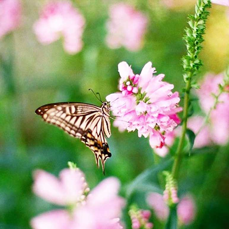 A butterfly snacking on a flower
