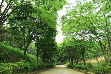 Trail towards Seonghwangdang in Wolmyeongdong