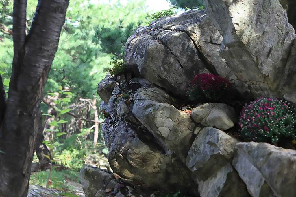 An image boulder with the face of an elderly grandmother