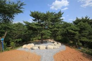 Wolmyeongdong Prayer Miracle Pine (Formerly Haetae Pine) 1