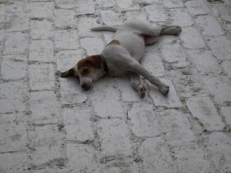 """Na stepie w Udabno – wsi pośrodku niczego, życie sączy się tak leniwie, że każdy ma ochotę być jak """"Lazy Dog"""" :)"""