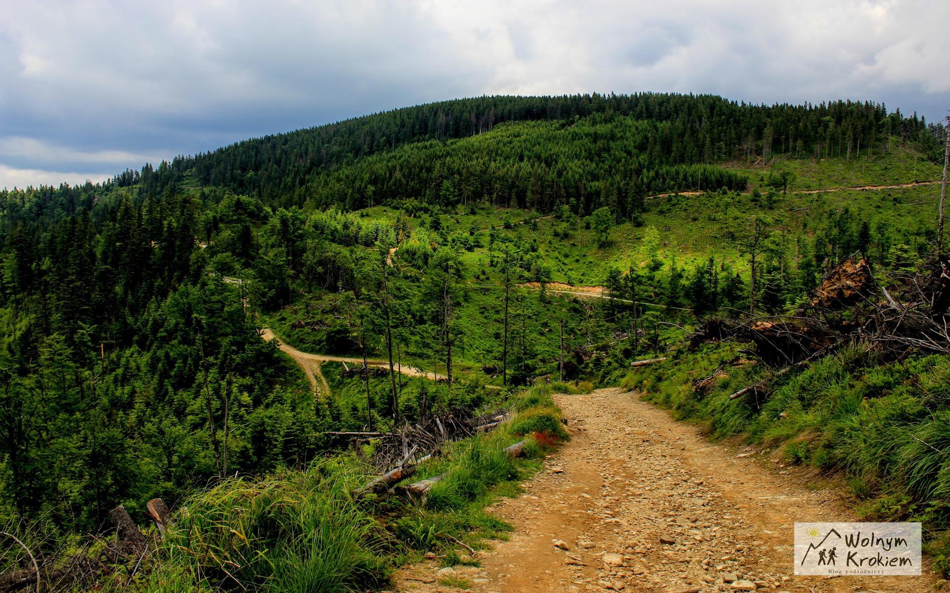 Radziejowa szlak na szczyt