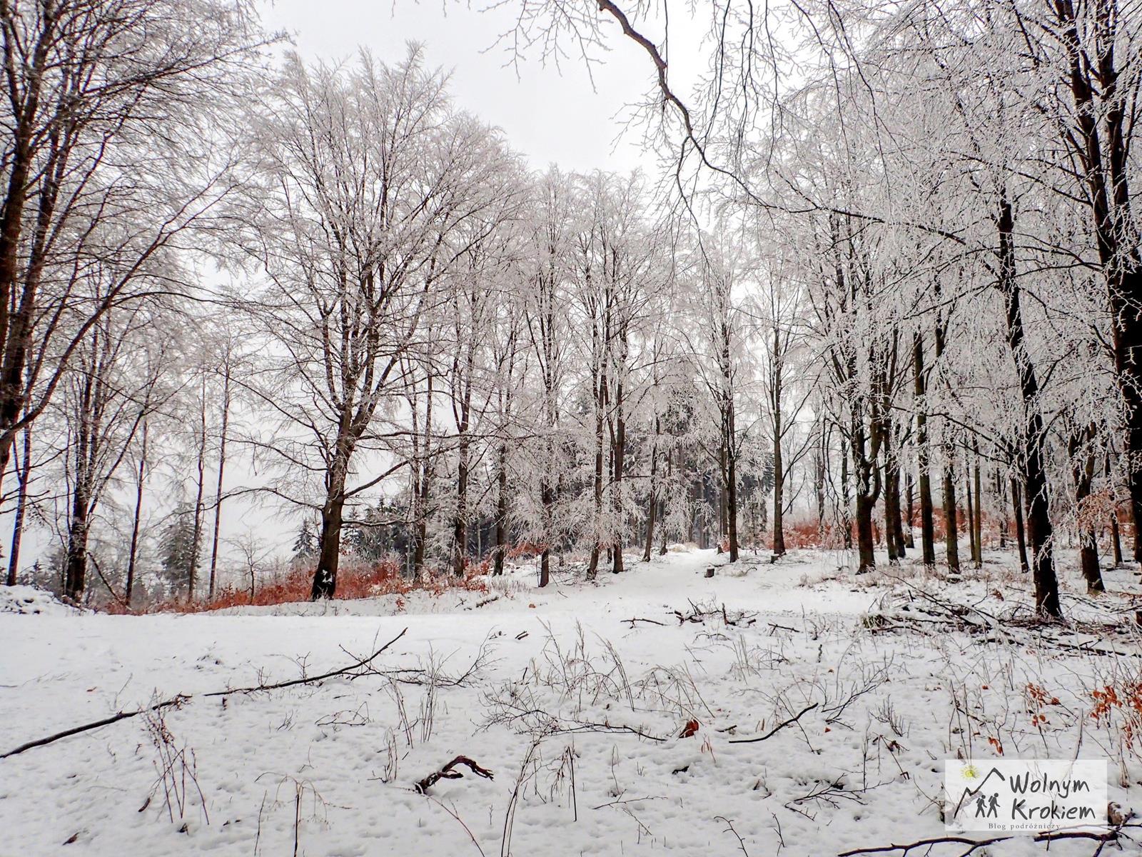 Szlak na Włodarz (Góry Sowie)