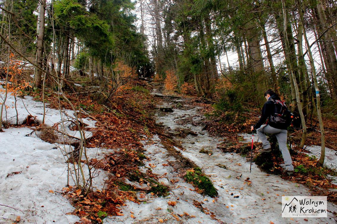 Szlak zielony na Wielki Stożek w Beskidzie Śląskim
