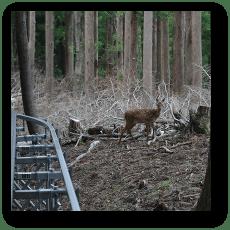 最高地点付近で子鹿に遭遇