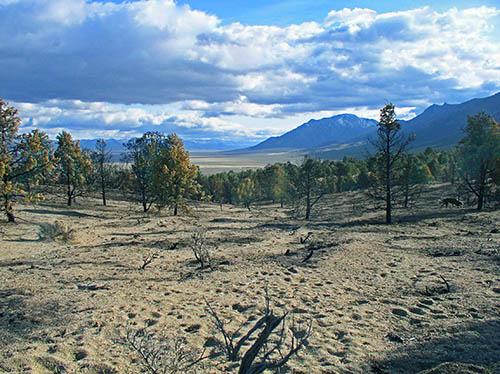 juniper-burn-egan-range.jpg