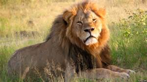 Death of Cecil, Will Mankind Get the Bigger Picture Before it's too Late?