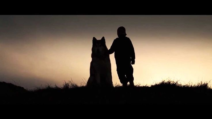 Boy And Wolf A Short Film For Kids By Stephen Reynolds