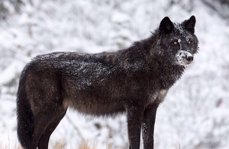 WDNR Wolf Advisory Committee is not fair and balanced