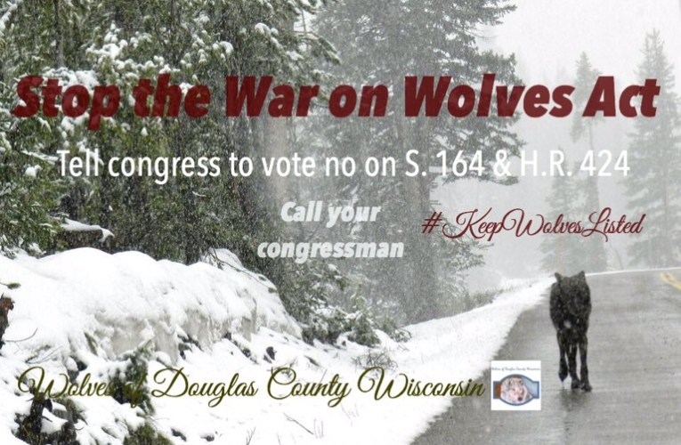 Action Alert: Stop the War on Wolves Act