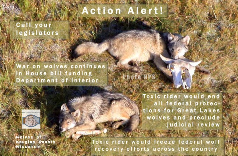 Action Alert! Anti-Wolf Riders in House Bill Funding Dept of Interior