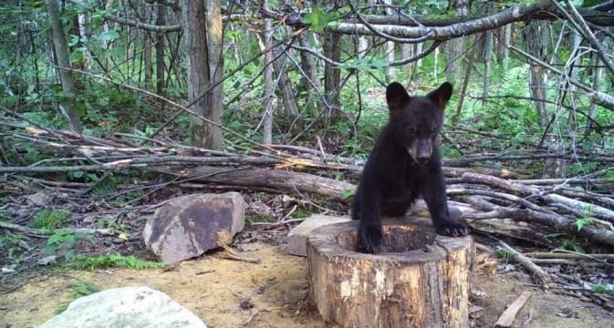 Learn the basics before hunting bears