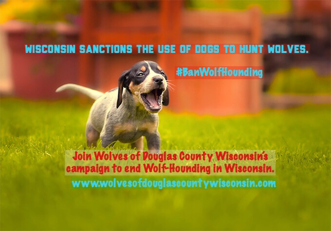 First step in the campaign to end Wolf-hounding in Wisconsin is Awareness…
