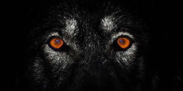 Lone Wolf, Bad Wolves, Big Bad Wolf Just More Oxymorons & Fairy Tales…