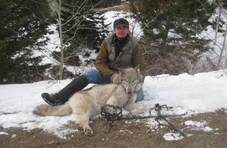 Removing the Gray wolf off of federal protection spells disaster for a Species already threatened by habitat loss and global warming.