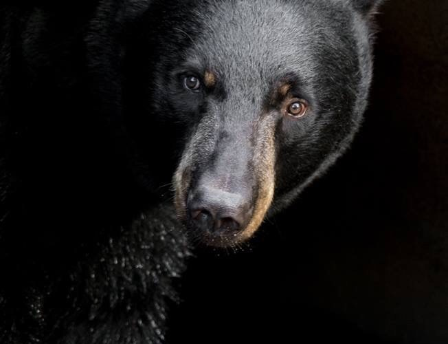 The 2019 Wisconsin black Bear Management draft plan is now available to the public for comment.