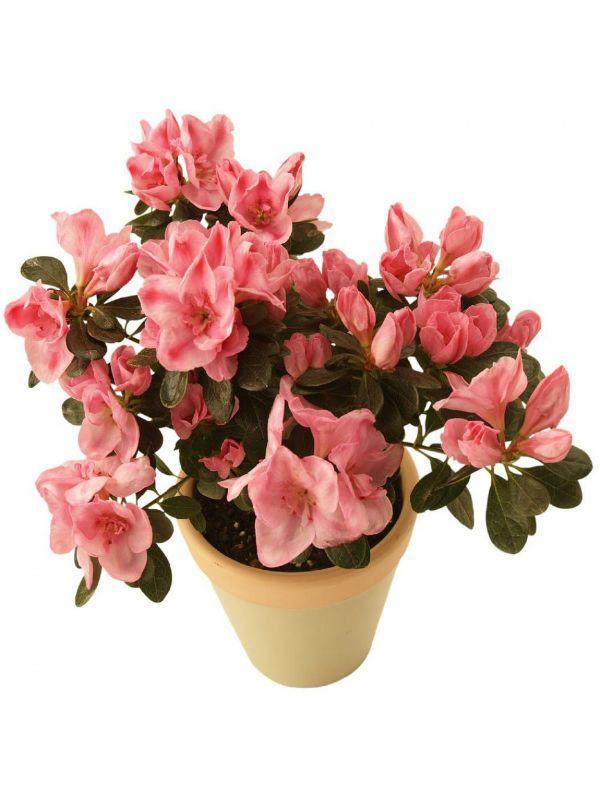 Нужны ли комнатные растения в доме