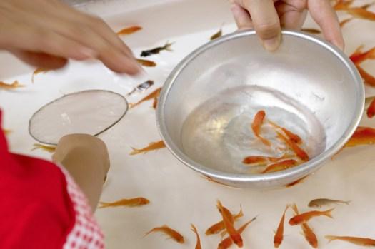 お祭りで金魚をとっているイメージ画像