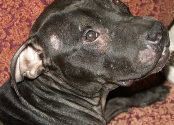 Лишай у собаки - лечение в домашних условиях