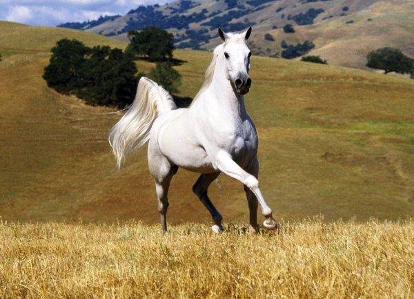 Как нарисовать лошадь карандашом поэтапно?