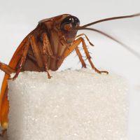 Молитва от тараканов в квартире