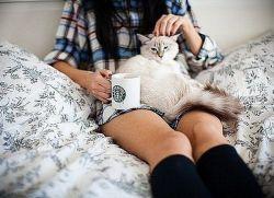 Учим британского кота сидеть на руках основные способы