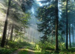 Почему нельзя ходить в лес 27 сентября?