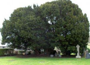 dendrohronologija datiranja prstenova drveća