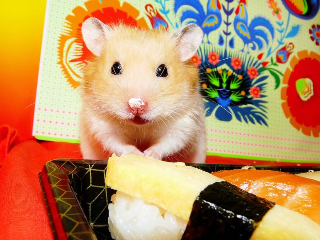 How to care for a hamster at home? Care for hamsters