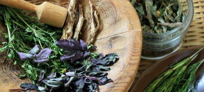 herbs for hair density