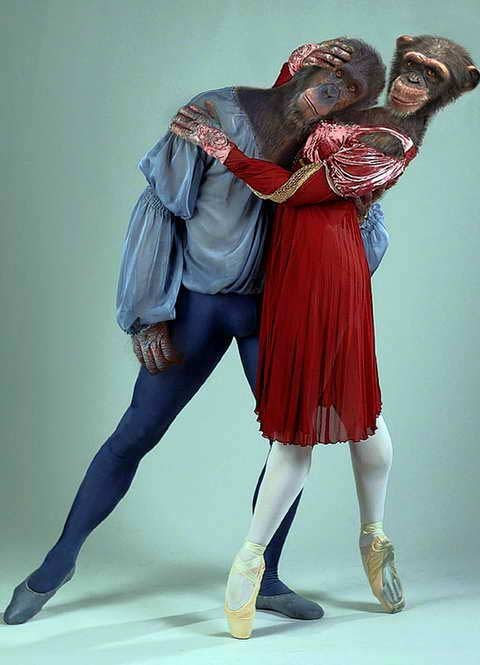 Мужчина Обезьяна и женщина Обезьяна - совместимость