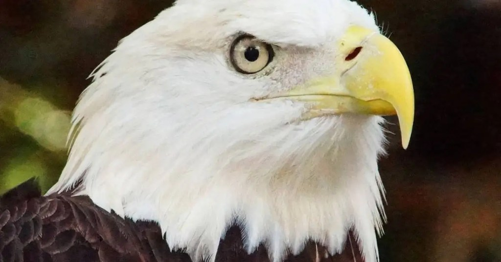 Bible Verses About Eagles