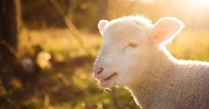 bible verses about lambs