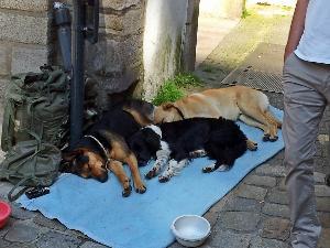 20140531_111855 dogs on street 300