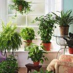 5 натуральных удобрений