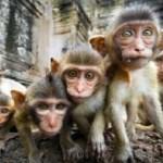 обезьяний ад