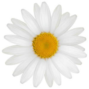 сайт женский дневничок