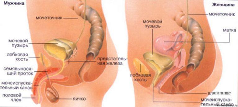 megfagyott az urethreban